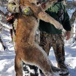 Colorado Trophy Mountain Lion Photo-2