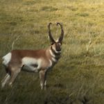 Colorado Trophy Antelope Photo-5