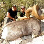 Desert Bighorn Sheep Hunt